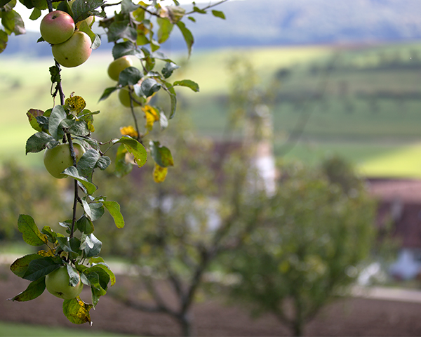 Apfel_Olsberg