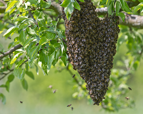 Bienen_Biobetrieb_Stiftolsberg
