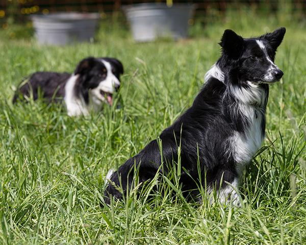 Hunde_Stiftolsberg
